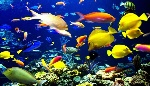 tropical-fish-790x456