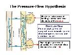 pressureflow
