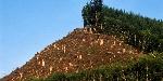 img_la_evolucion_de_la_deforestacion_en_los_ultimos_siglos_241_orig