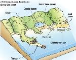 Coastal Landforms depositional