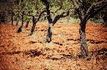 ibiza-island-landscape-agriculture-fields-red-clay-soil-41220632