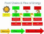 energy flow web