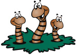 worm-clipart-vermicomposting-8