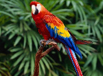 Parrot resized