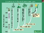 lecture4-life-cycle-of-plants-7-728
