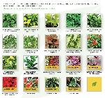 calvin-flowers-art-chart-test-1