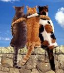 gatos_amigos