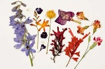 how-to-arrange-flowers-20