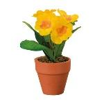 Pianta-Primule-naturale-35876596