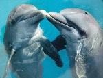 делфини2