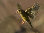 vogelsoorten