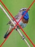 vogelsoorten verwijnen