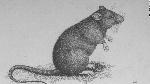 150225145949-aman-rat-super-169