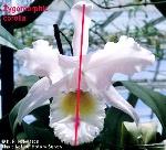 29- Zygomorphic flower