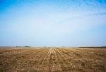 campo-vacío-de-la-soja-después-de-la-cosecha-49108602