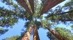 Tree yosemite