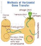 horizontal-gene-transfer