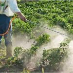 carbamate-pesticides-250x250