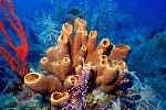 Curiosidades-sobre-las-esponjas-marinas-1