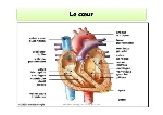 anatomie-cardiocirculatoire-32-638
