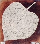 pl-14_leaf-photobook