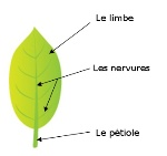 feuille 4