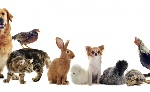 group-of-animals-white-background-825x510