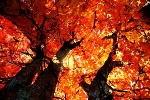 autunno4