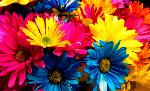 significado-color-flores-735x450