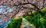 Türkiyede-İlkbaharda-Gezilecek-10-Yer