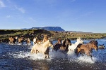 islande_kjolur_randonnee_cheval_jokull001