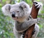 10-curiosidades-sobre-los-marsupiales-australianos-7