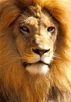 zoo_mamif_pelo