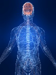 sistema-nervoso-destacado-6604487