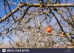 árvore podre