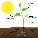depositphotos_33182823-stock-illustration-scheme-of-photosynthesis
