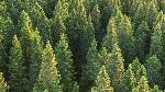 141117_li9ld_foret_arbre_sapin_sn635