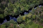 Hutan-Rawa-Gambut